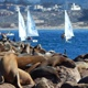 Seals And Boats